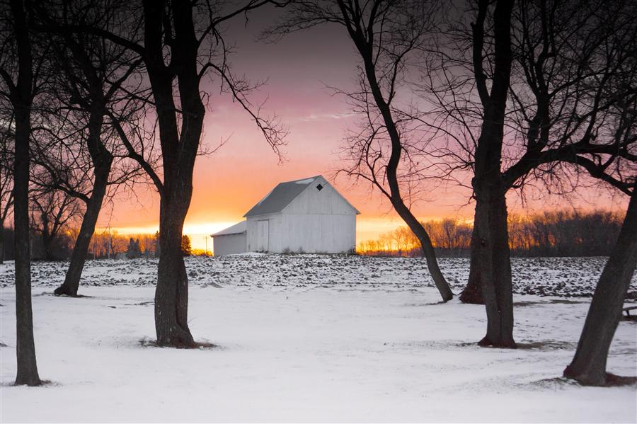 Original art for sale at UGallery.com | Morning on the Farm by Lorianne Ende | $250 | photography | 36' h x 24' w | ..\art\photography-Morning-on-the-Farm
