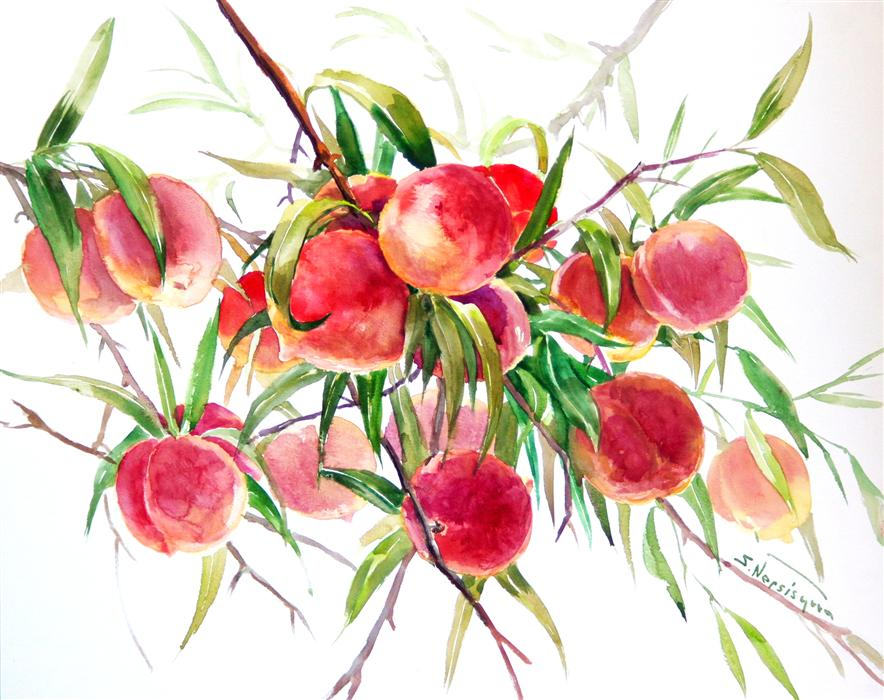 Original art for sale at UGallery.com | Peaches (Fruits on the Tree) by SUREN NERSISYAN | $525 | Watercolor painting | 16' h x 20' w | ..\art\watercolor-painting-Peaches-Fruits-on-the-Tree