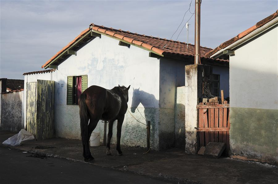 Original art for sale at UGallery.com   Horse and His Double by Gustavo Minas   $300   photography   30' h x 20' w   ..\art\photography-Horse-and-His-Double