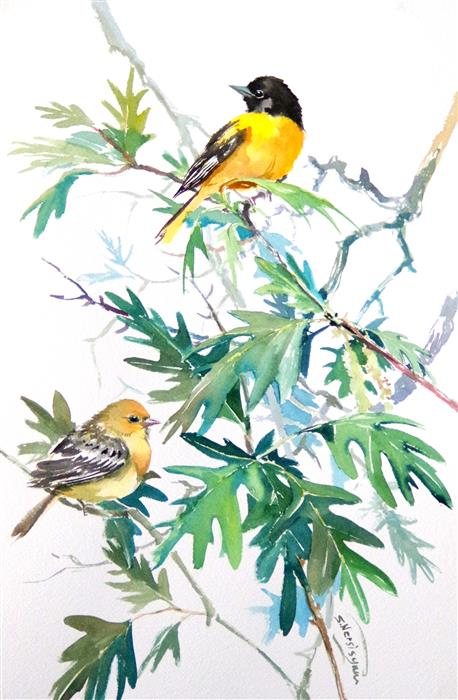 Original art for sale at UGallery.com | Baltimore Orioles and White Oak Tree by SUREN NERSISYAN | $400 | Watercolor painting | 18' h x 12' w | ..\art\watercolor-painting-Baltimore-Orioles-and-White-Oak-Tree