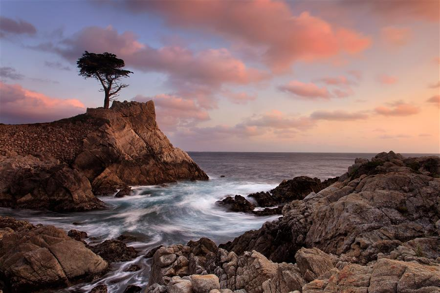 Original art for sale at UGallery.com | Lone Cypress Sunset by Katherine Gendreau | $50 | photography | 18' h x 12' w | ..\art\photography-Lone-Cypress-Sunset