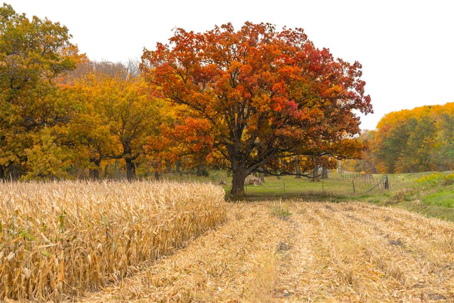 Original art for sale at UGallery.com | Autumn in the Pasture by Lorianne Ende | $25 | photography | 15' h x 10' w | ..\art\photography-Autumn-in-the-Pasture