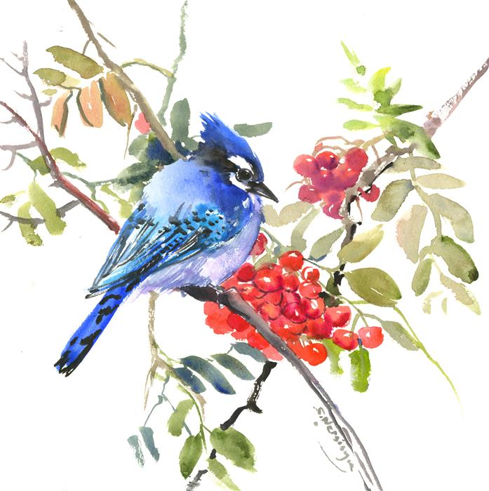 Original art for sale at UGallery.com | Blue Jay and Rowan by Suren Nersisyan | $300 | watercolor painting | 12' h x 12' w | ..\art\watercolor-painting-Blue-Jay-and-Rowan