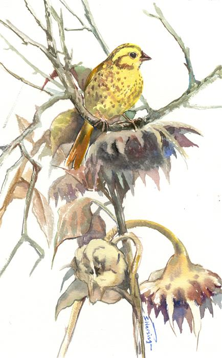 Original art for sale at UGallery.com | Yellowhammer and Dry Sunflowers (Vertical) by SUREN NERSISYAN | $300 |  | 14' h x 9' w | ..\art\watercolor-painting-Yellowhammer-and-Dry-Sunflowers-Vertical