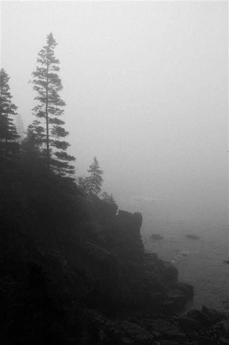 Original art for sale at UGallery.com | Evergreens in Fog by Adam Garelick | $50 | photography | 15' h x 10' w | ..\art\photography-Evergreens-in-Fog