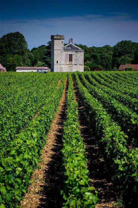 Original art for sale at UGallery.com | Clos du Vougeot Vineyard, Burgundy by Mathew Lodge | $25 | photography | 18' h x 12' w | ..\art\photography-Clos-du-Vougeot-Vineyard-Burgundy