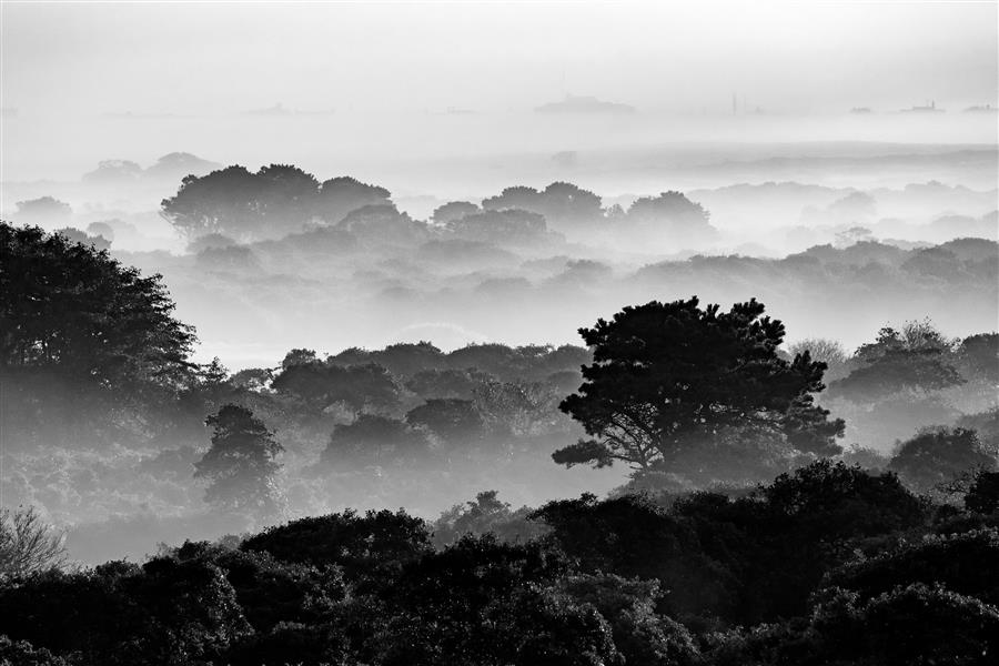 Original art for sale at UGallery.com | Nantucket Moors in Fog by Katherine Gendreau | $25 | photography | 18' h x 12' w | ..\art\photography-Nantucket-Moors-in-Fog