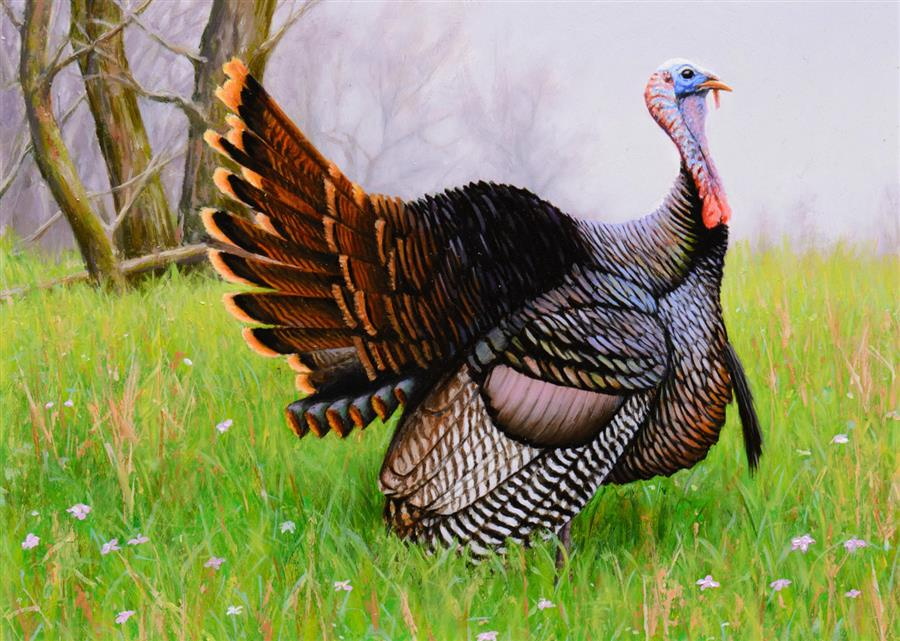 Original art for sale at UGallery.com | Wild Turkey Spring by NATHAN HAGER | $300 |  | 6.5' h x 9' w | ..\art\oil-painting-Wild-Turkey-Spring