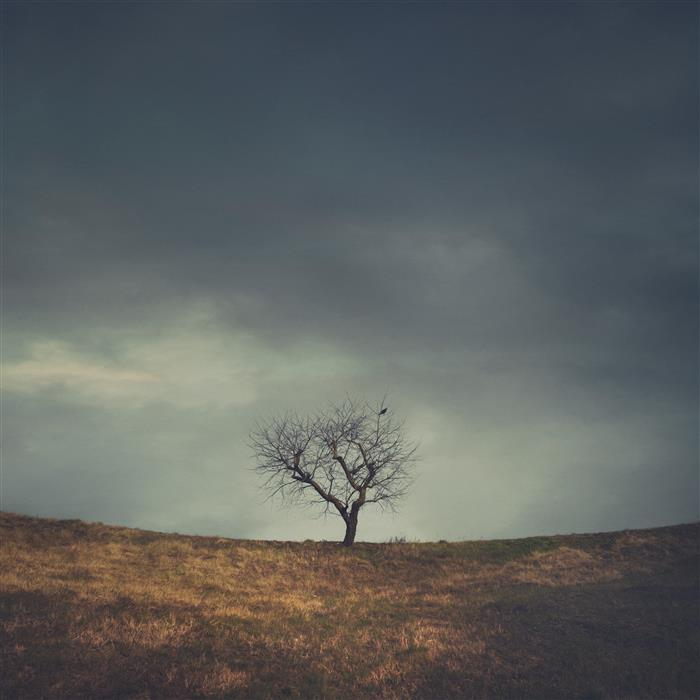 Original art for sale at UGallery.com | Shapes In Nature - Lonely Dryness by Fabio Sozza | $50 | photography | 12' h x 12' w | ..\art\photography-Shapes-In-Nature-Lonely-Dryness