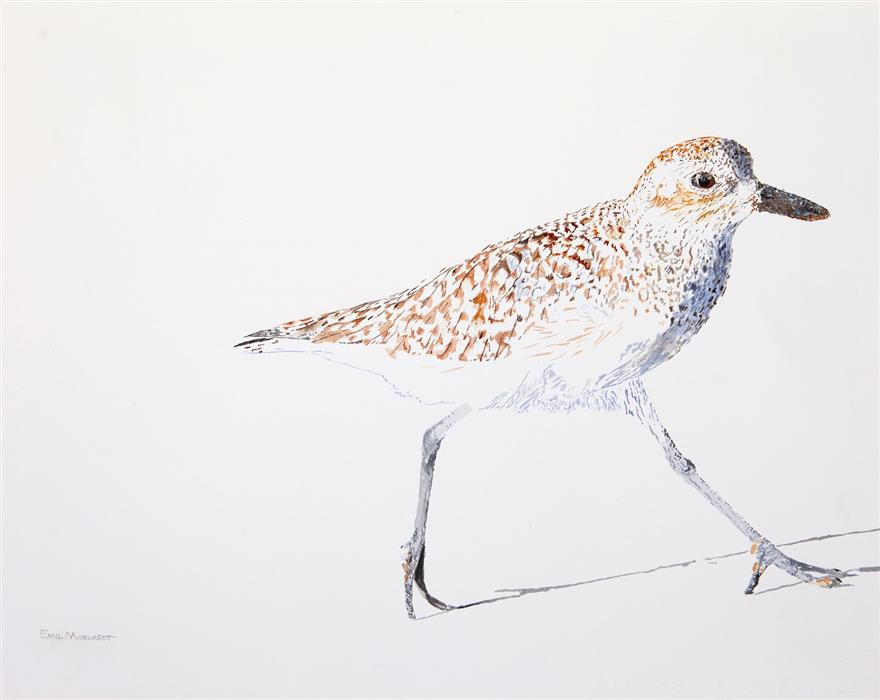 Original art for sale at UGallery.com   Black-Bellied Plover #9 by Emil Morhardt   $425   watercolor painting   16' h x 20' w   ..\art\watercolor-painting-Black-Bellied-Plover-9