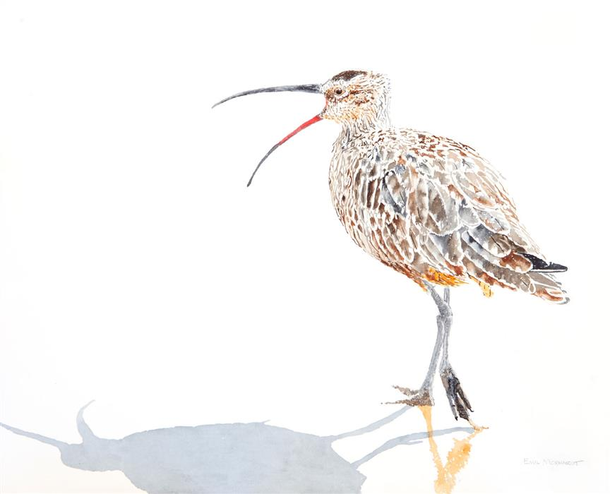 Original art for sale at UGallery.com | Whimbrel #11 Speaking Out by EMIL MORHARDT | $450 |  | 16' h x 20' w | ..\art\watercolor-painting-Whimbrel-11-Speaking-Out