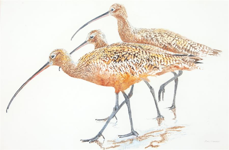 Original art for sale at UGallery.com | Three Long-Billed Curlews by Emil Morhardt | $1,525 | acrylic painting | 24' h x 36' w | ..\art\acrylic-painting-Three-Long-Billed-Curlews
