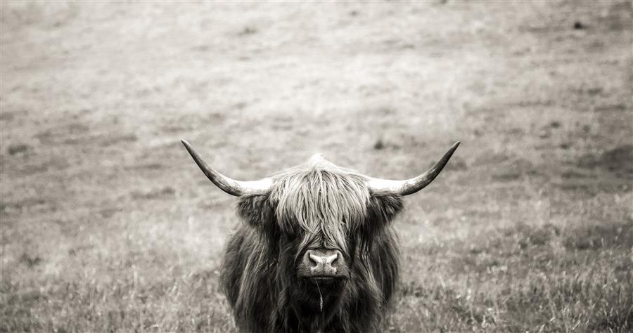 Original art for sale at UGallery.com | Hipster Coo by Mark Friedman | $25 | photography | 18' h x 12' w | ..\art\photography-Hipster-Coo