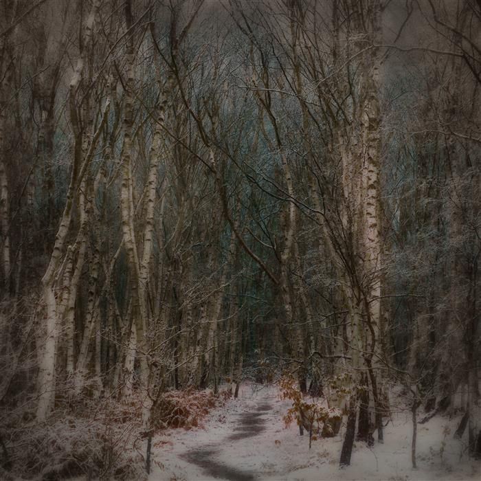 Original art for sale at UGallery.com | Winter by Curtis Radclyffe | $50 | photography | 12' h x 12' w | ..\art\photography-Winter