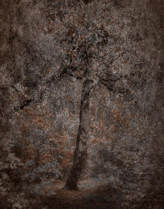 Original art for sale at UGallery.com | Autumn by Curtis Radclyffe | $50 | photography | 14' h x 11' w | ..\art\photography-Autumn
