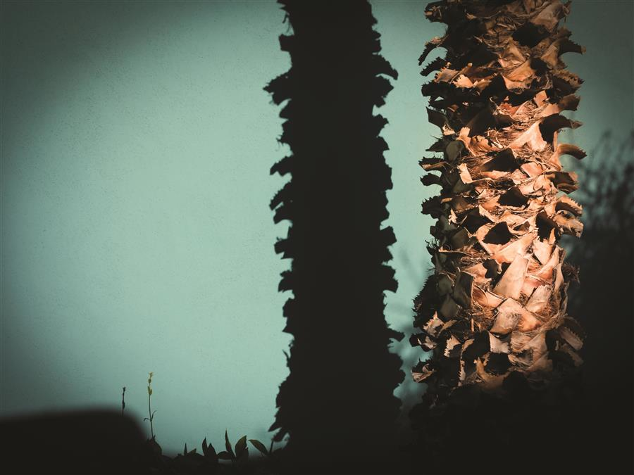 Original art for sale at UGallery.com | Palm Tree and Its Shadow by Yasmine Rafii | $25 | photography | 16' h x 12' w | ..\art\photography-Palm-Tree-and-Its-Shadow