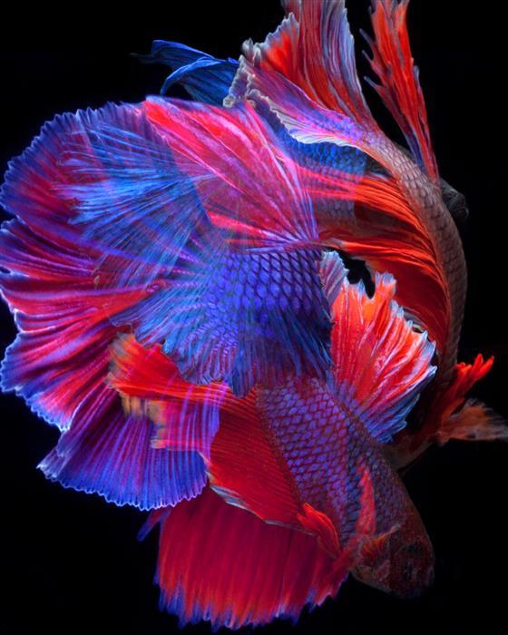 Original art for sale at UGallery.com | Aqua Vogue by Michael Filonow | $25 | photography | 24' h x 30' w | ..\art\photography-Aqua-Vogue