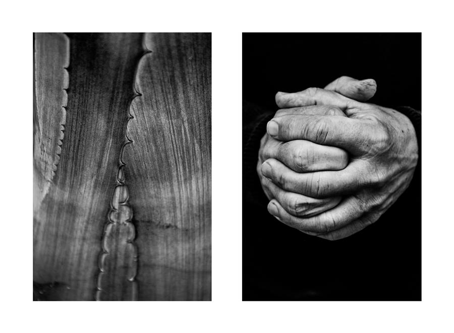 Original art for sale at UGallery.com | Diptych No. 2 by Alicja Brodowicz | $150 | photography | 15' h x 10' w | ..\art\photography-Diptych-No-2