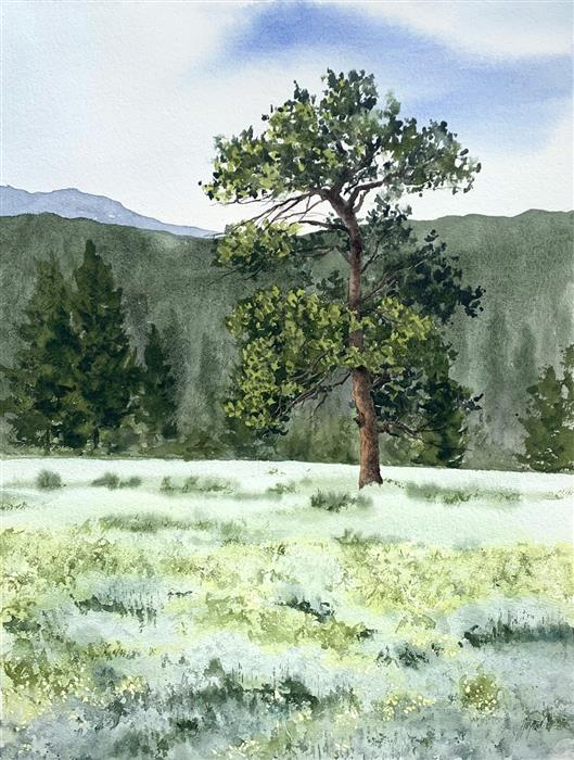 Original art for sale at UGallery.com | Colorado Pine by Jill Poyerd | $1,500 | watercolor painting | 24' h x 18' w | ..\art\watercolor-painting-Colorado-Pine