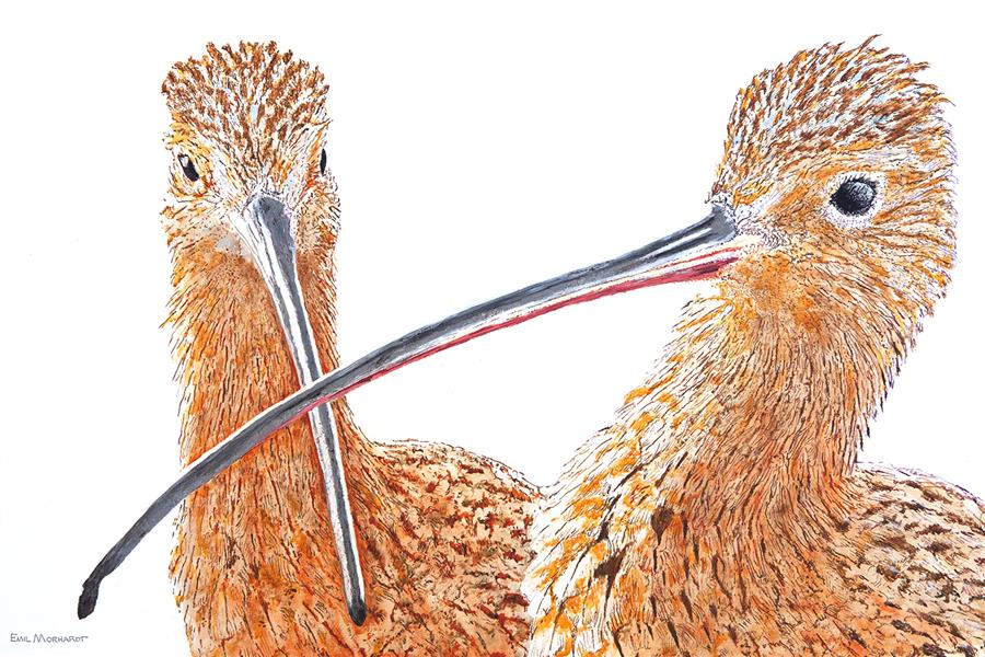 Original art for sale at UGallery.com | A Pair of Curlews by Emil Morhardt | $1,925 | acrylic painting | 24' h x 36' w | ..\art\acrylic-painting-A-Pair-of-Curlews