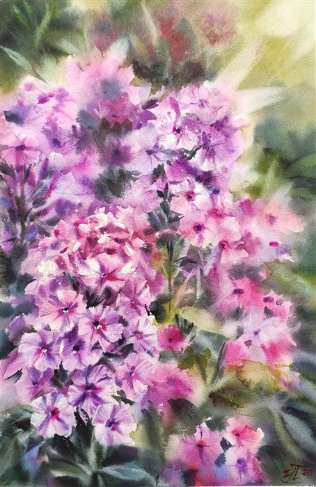 Original art for sale at UGallery.com | Phlox in the Garden by Irina Pronina | $925 | watercolor painting | 21' h x 15' w | ..\art\watercolor-painting-Phlox-in-the-Garden