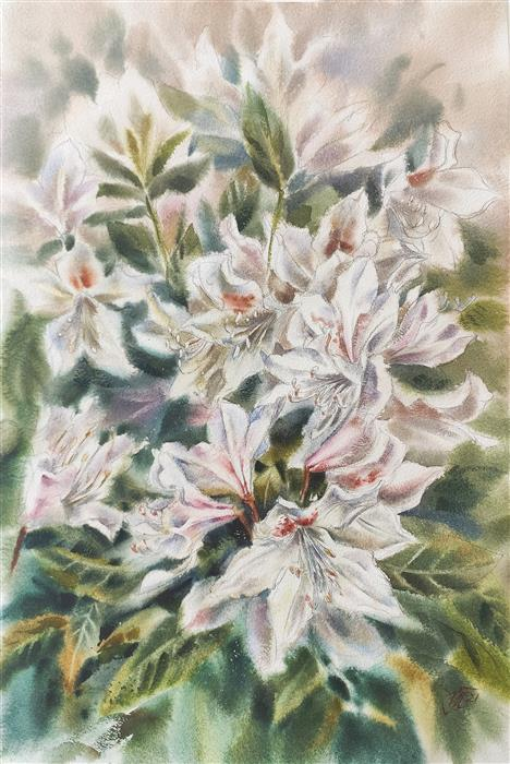 Original art for sale at UGallery.com | Rhododendron Blooming by Irina Pronina | $925 | watercolor painting | 21' h x 15' w | ..\art\watercolor-painting-Rhododendron-Blooming