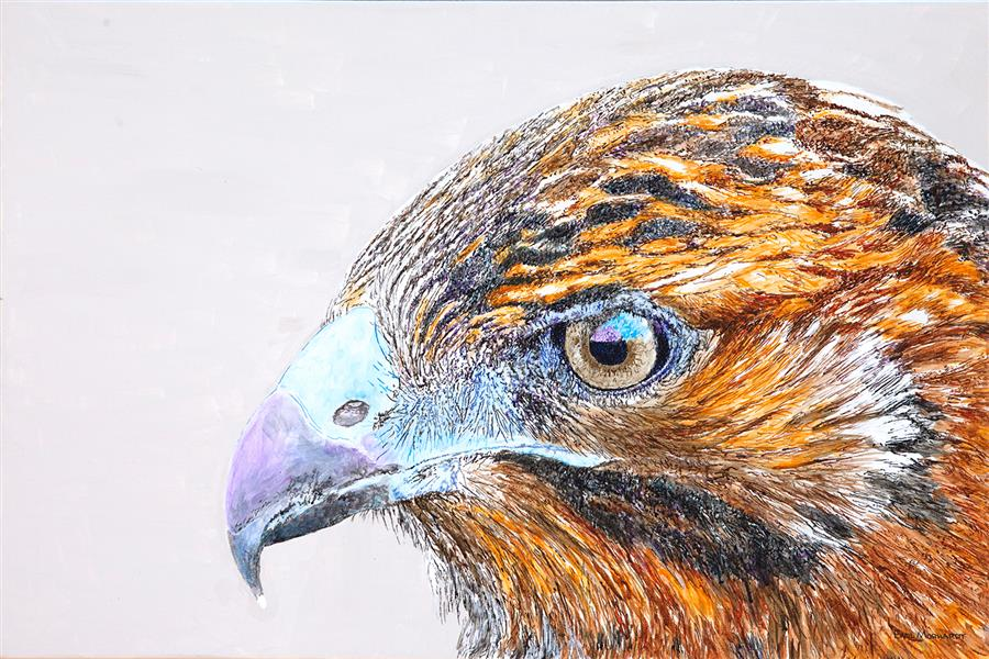 Original art for sale at UGallery.com   Galapagos Hawk by Emil Morhardt   $1,925   acrylic painting   24' h x 36' w   ..\art\acrylic-painting-Galapagos-Hawk