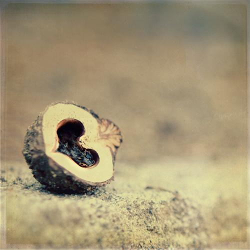 Original art for sale at UGallery.com | Nut Love by CHELSEA BEERY | $135 |  | ' h x ' w | \art\photography-Nut-Love