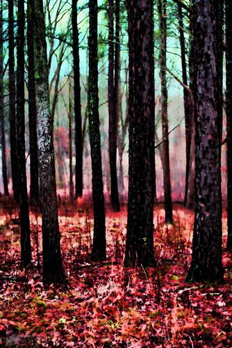 Original art for sale at UGallery.com | Beyond the Trees by NOELLE VISCONTI | $135 |  | ' h x ' w | \art\photography-Beyond-the-Trees