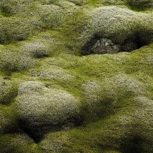 Original art for sale at UGallery.com | Iceland in Green by ETIENNE ROUDAUT | $160 |  | ' h x ' w | \art\photography-Iceland-in-Green