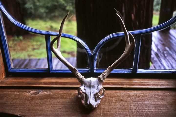 Discover Original Art by Alex Ember | green ranch 2009 photography | Art for Sale Online at UGallery