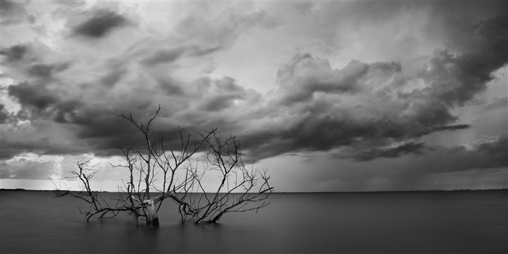 Original art for sale at UGallery.com | The Old Bay Tree by ANDREW VERNON | $295 |  | ' h x ' w | \art\photography-The-Old-Bay-Tree