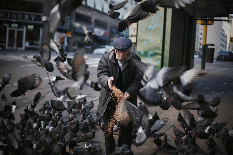 Original art for sale at UGallery.com | Pigeons in Buenos Aires by MARIA PLOTNIKOVA | $245 |  | ' h x ' w | \art\photography-Pigeons-in-Buenos-Aires
