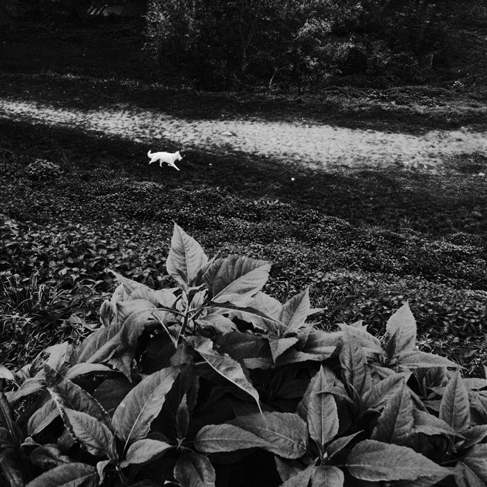 Original art for sale at UGallery.com | White Dog by ILLIA KRASNOSHCHOK | $160 |  | ' h x ' w | \art\photography-White-Dog