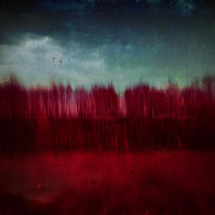 Original art for sale at UGallery.com | Red Trees by RAFAL  KIJAS | $260 |  | ' h x ' w | \art\photography-Red-Trees