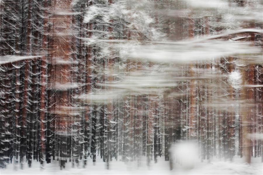 Original art for sale at UGallery.com | Pines by MARIA PLOTNIKOVA | $280 |  | ' h x ' w | \art\photography-Pines