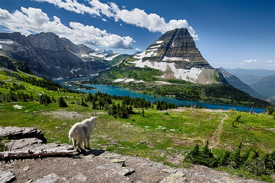 Original art for sale at UGallery.com | Hidden Lake and Mountain Goat by JAY MOORE | $170 |  | ' h x ' w | \art\photography-Hidden-Lake-and-Mountain-Goat