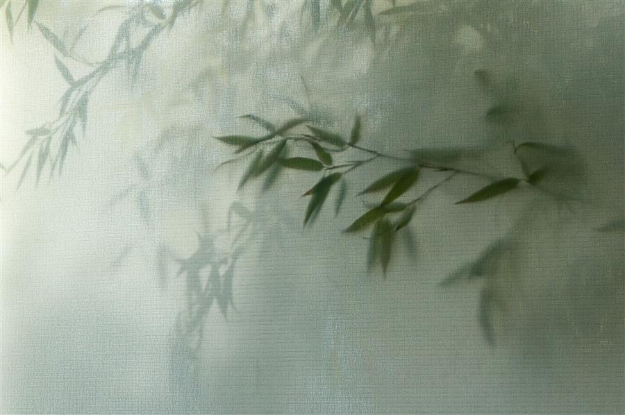 Original art for sale at UGallery.com | Bamboo by KIMBERLY POPPE | $145 |  | ' h x ' w | \art\photography-Bamboo