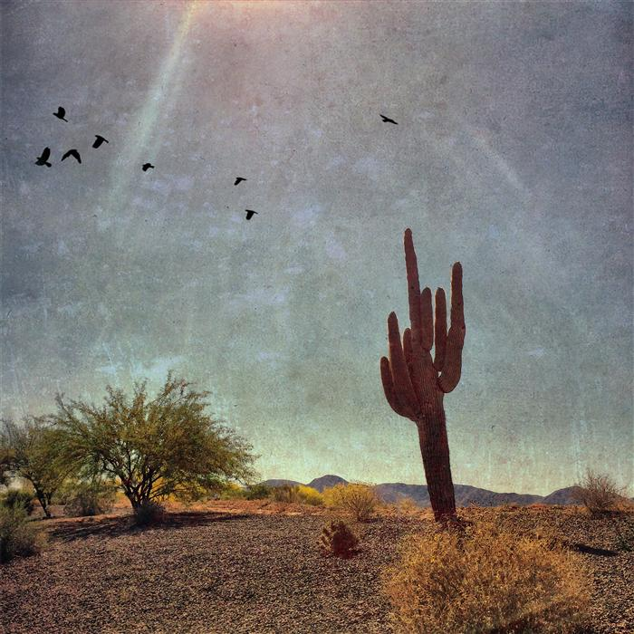 Original art for sale at UGallery.com | Saguaro Cactus Near the White Tank Mountains, Arizona by GREG DYRO | $120 |  | ' h x ' w | \art\photography-Saguaro-Cactus-Near-the-White-Tank-Mountains-Arizona