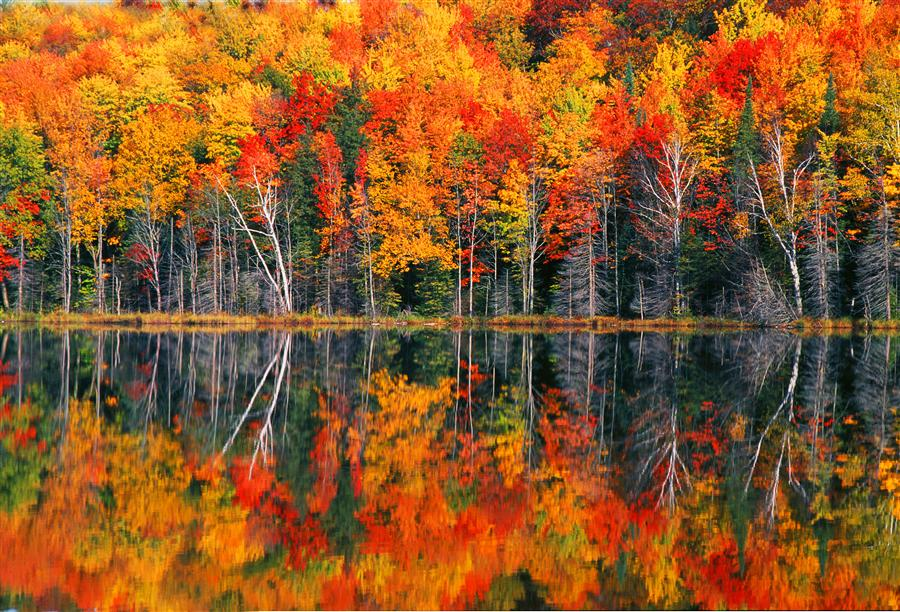 Discover Original Art by Abhi Ganju | Redjack Lake Fall photography | Art for Sale Online at UGallery