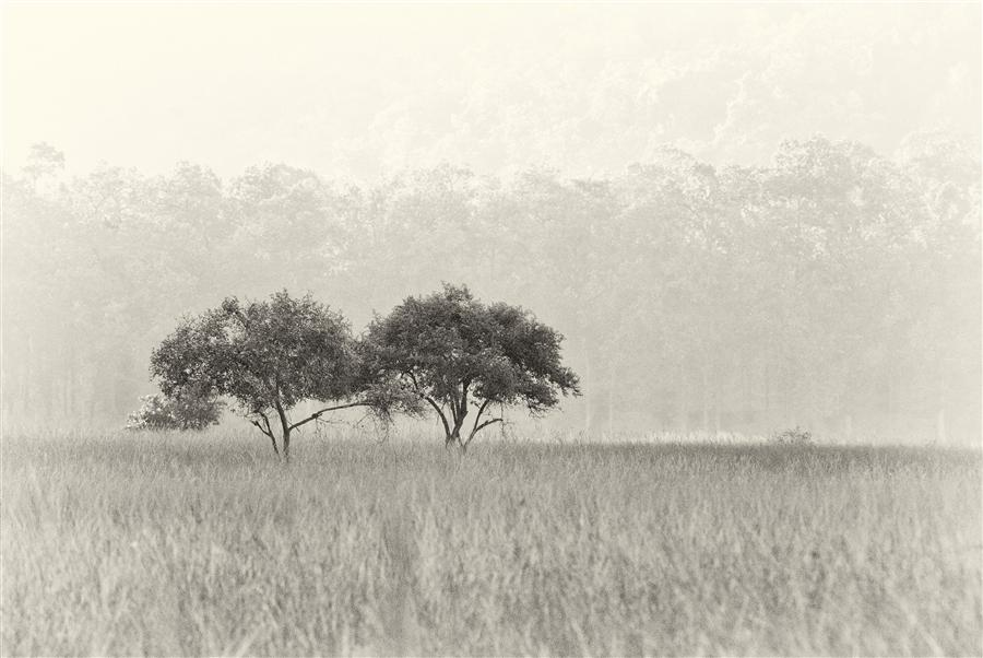 Original art for sale at UGallery.com | Tree Duo by AMOGHAVARSHA JS | $295 |  | ' h x ' w | \art\photography-Tree-Duo