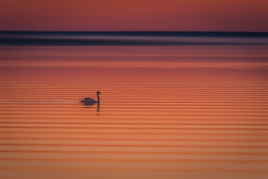 Original art for sale at UGallery.com | Morning Ripples by MICHAEL BUSCH | $145 |  | ' h x ' w | \art\photography-Morning-Ripples
