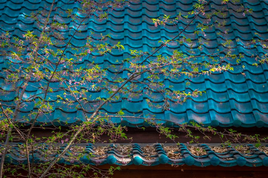 Discover Original Art by Greg Dyro | Blue Tile Roof photography | Art for Sale Online at UGallery
