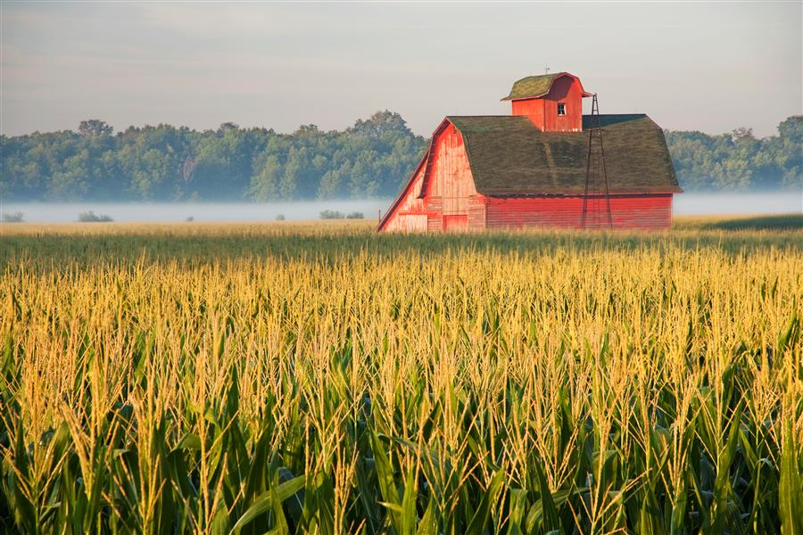 Original art for sale at UGallery.com | Red Barn in Midwest Cornfield by ABHI GANJU | $170 |  | ' h x ' w | \art\photography-Red-Barn-in-Midwest-Cornfield
