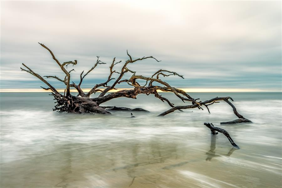 Original art for sale at UGallery.com | Driftwood Beach 3 by MIKE RING | $195 |  | ' h x ' w | \art\photography-Driftwood-Beach-3