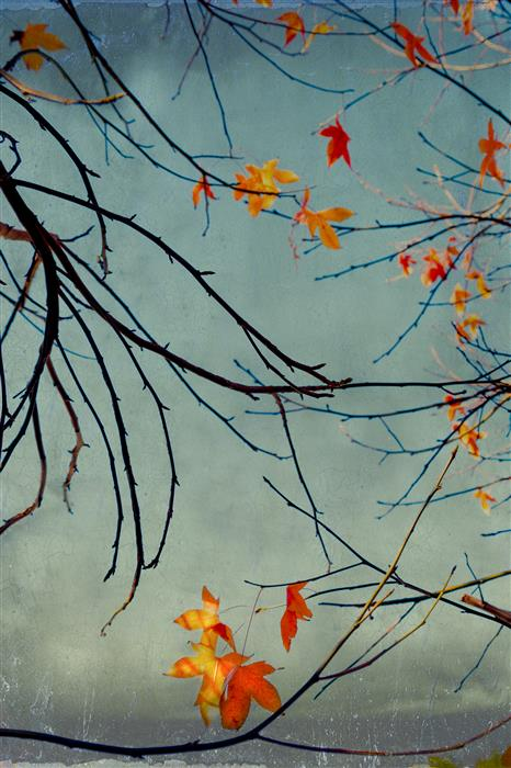 Original art for sale at UGallery.com | Zen-Like Leaves by GREG DYRO | $120 |  | ' h x ' w | \art\photography-Zen-Like-Leaves