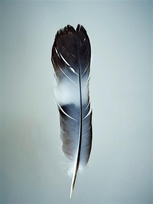 Original art for sale at UGallery.com | Feather by KATHLEEN FINLAY | $355 |  | ' h x ' w | \art\photography-Feather