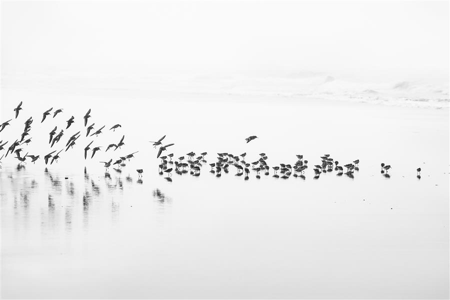 Original art for sale at UGallery.com | Flocking by STEPHANIE SHERMAN | $195 |  | ' h x ' w | \art\photography-Flocking