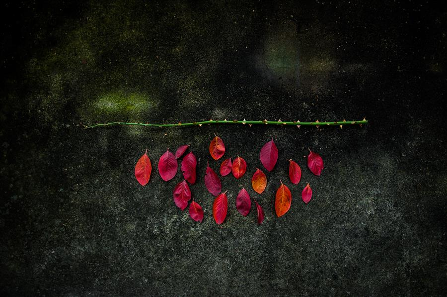 Original art for sale at UGallery.com | Autumn Abstraction by ALICJA BRODOWICZ | $355 |  | ' h x ' w | \art\photography-Autumn-Abstraction