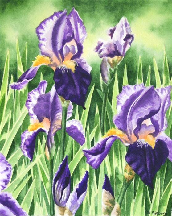 Discover Original Art by Susan Sjoberg | Iris Garden watercolor painting | Art for Sale Online at UGallery